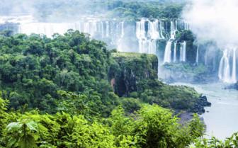 Iguacu Greenery