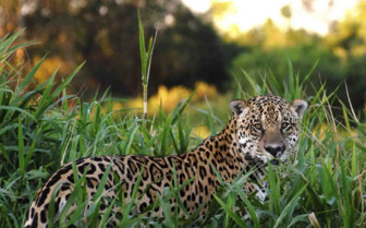 Wildlife in the Pantanal