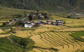 Houses Amongst the Fields