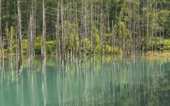 Hokkaido green Pond