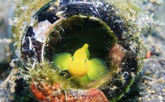 Little Yellow Fish Hiding