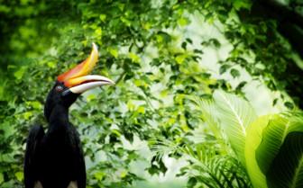 Bird in the Borneo Jungle