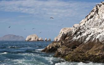 Birds flying over Coast