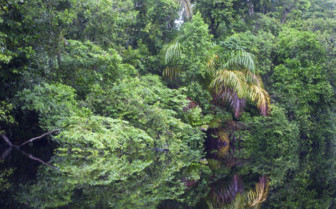 Tortuguero river and greenery