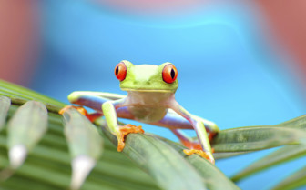 Wildlife of Tortuguero rainforest