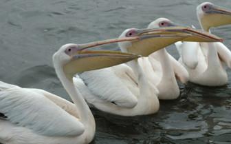 Birds and wildlife of Namibia