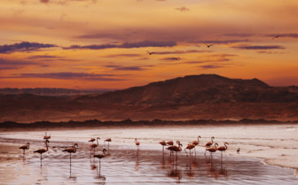 Flamingos on the Namibian coast