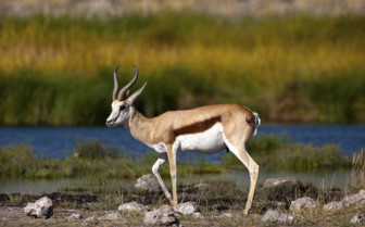 Damaraland wildlife