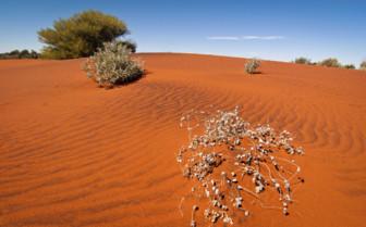 Dunes near to Uluru