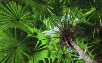 Daintree Canopy