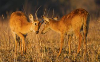 Livingstone wildlife