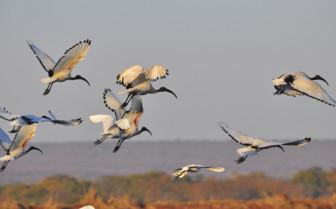 Birds in Livingstone