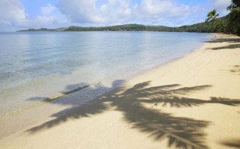 Palm tree shadow, Fiji