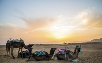 Southern Desert camels and sunset