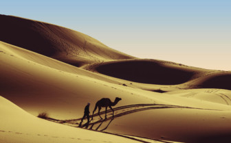 Camel and dunes in the Southern Desert