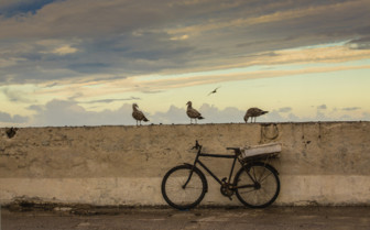 Bike and seagulls by the coast