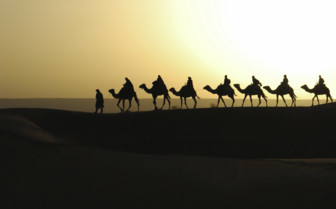 Camel silhouettes in Morocco