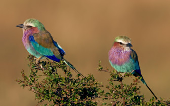 Birds in Kenya