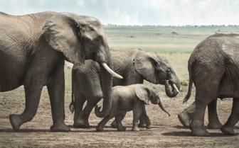 Elephant herd in Laikipia