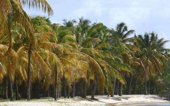Mustique island old plantation st vincent and the grenadines