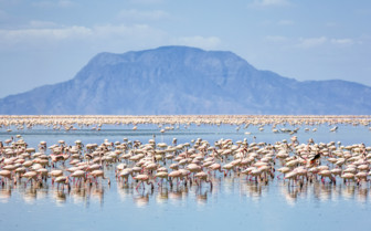 Flamingos in Northern Tanzania