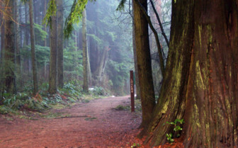Lovers Path in Stanley Park in Vancouver
