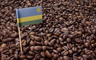 Coffee in Rwanda