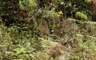 Jungle Land in Rwanda