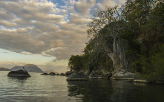 Lake Malawi Trees