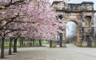 Blossom in Glasgow