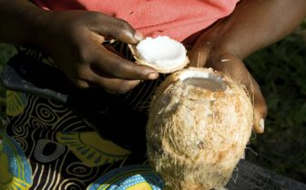 Fresh Coconut, Mozambique