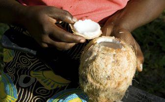Fresh Coconut, Mozambique