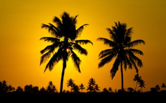 Sunset Palms, Mozambique