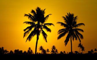 Sunset Palms, Mozambique