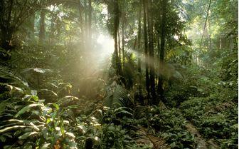 Tioman Jungle