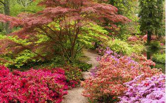 A picture of Exbury Gardens