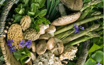 A collection of herbs, flowers and foods found whilst foraging in Cork