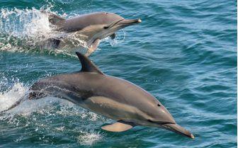Dolphin Spotting in Italy