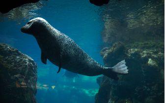 Seal Harbour Underwater
