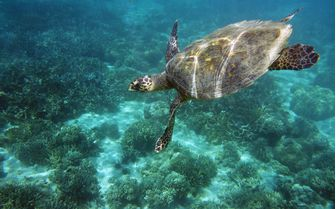 Sea Turtle, Madagascar