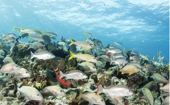 School of fishes in Bahamas