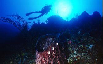 Diving in Bimini, Bahamas