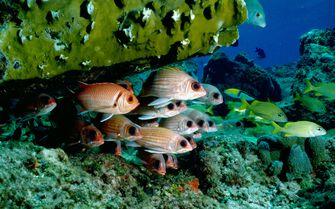 Tropical Fishes, Bahamas