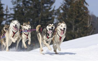Dog sledding, Sweden