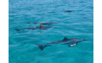 Picture of Dolphins Pemba Island