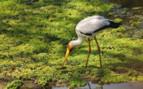 Wildlife of Zambia