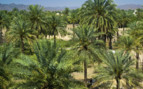 An Oasis of Palm Trees