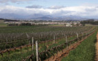 Sprawling vineyards