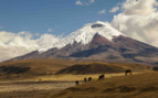 Snow Capped Peaks of the Andes