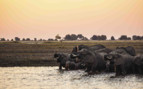 Elephants WAshing Okavango